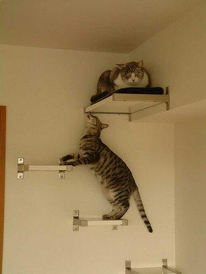 build your own cat furniture